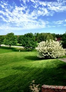Spring my yard