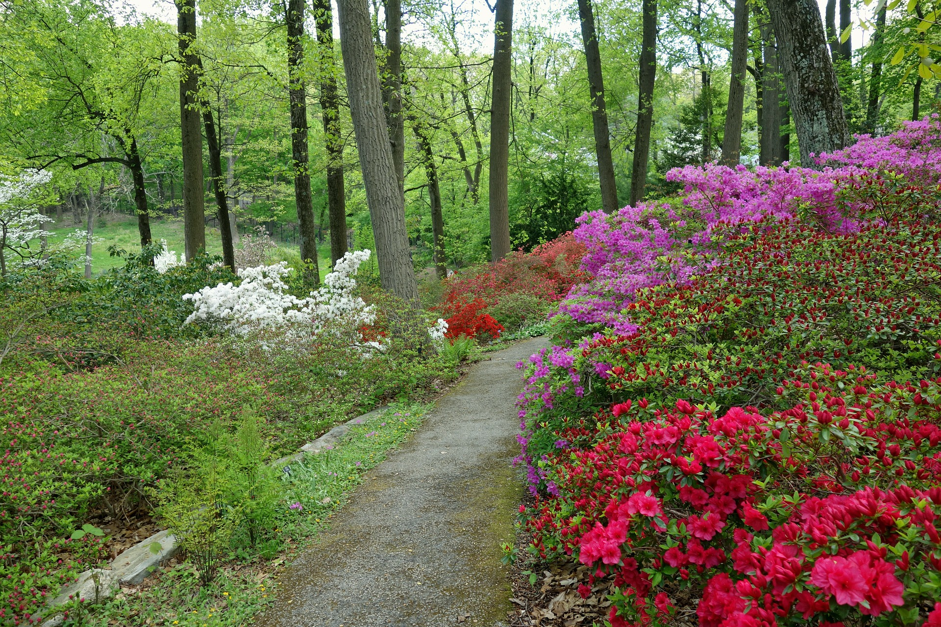spring things to do in ann arbor: nichols arboretum